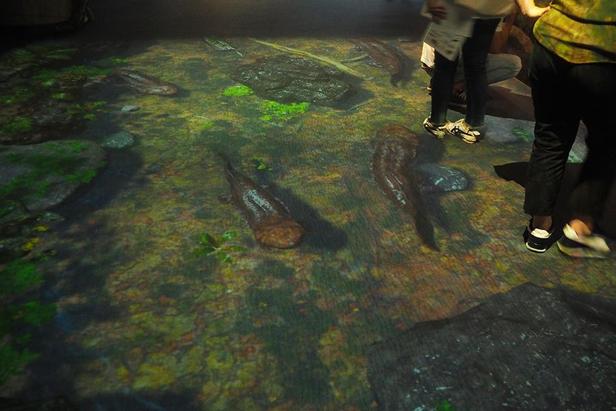 プロジェクションマッピングでオオサンショウウオが棲む鴨川を再現した企画展『ぬめぬめワールド』。足を踏み入れると川の水の波紋が広がったり、川魚が逃げたりする