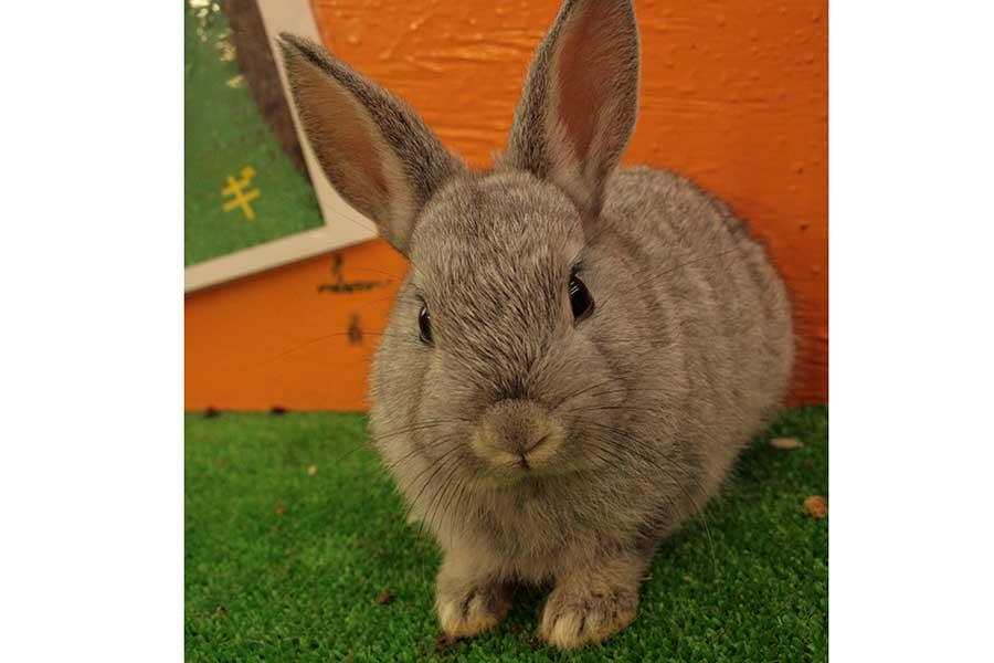 かわいらしいウサギも抱っこできる