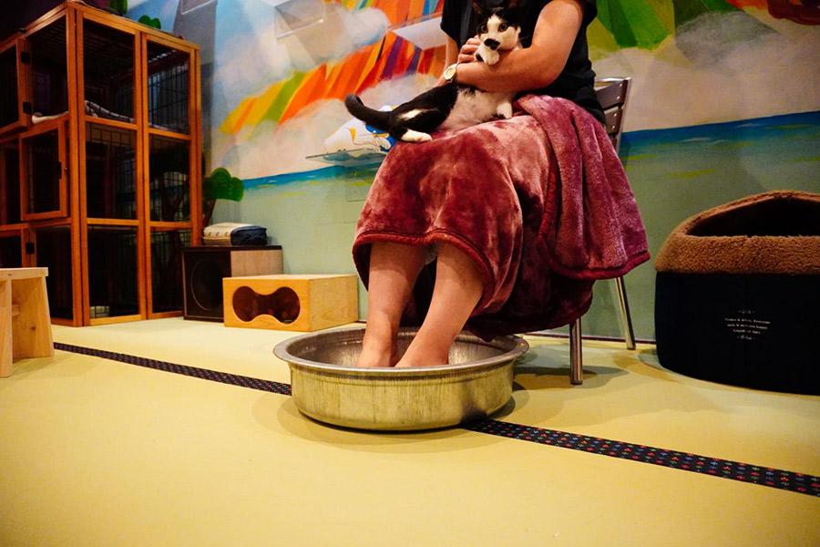 レトロな店内では、入浴ならぬ猫に癒やされる「ねこ浴」も