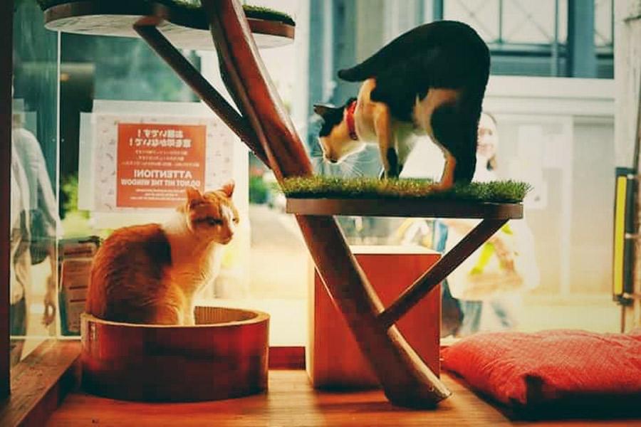 店外から眺められる「猫おどり場」はひなたぼっこに最適
