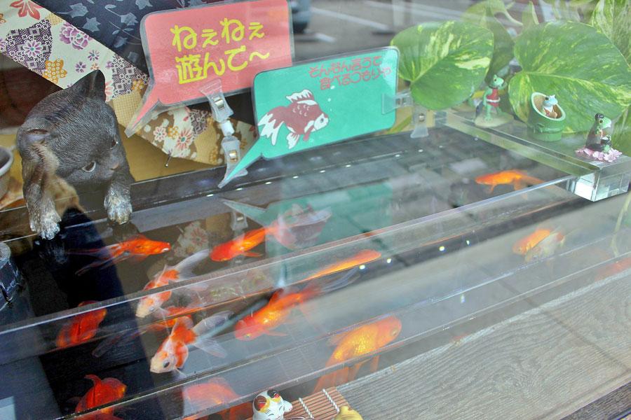 散策中立ち寄った北村呉服店の「金魚とねこ」。「正反対の組み合わせが面白いかな」と店主が考案