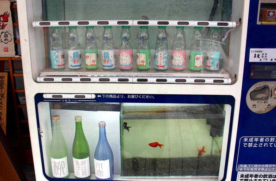 金魚カフェ「柳楽屋」の入り口横には、金魚自販機が設置。残念ながら実際にコインを入れての購入はできない