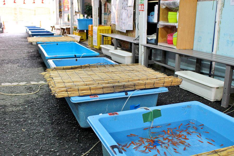 畠さんと小谷さんが練習のため通う「おみやげ処 こちくや」併設の「金魚すくい道場」。いつでも誰でも金魚すくいが体験できる
