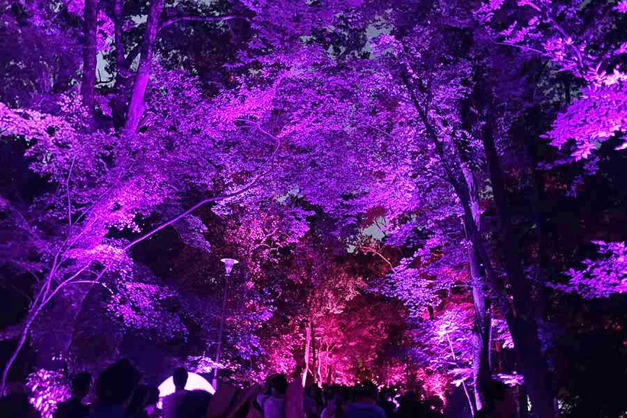 参道には行列ができ、光が変化していく森の姿を楽しんでいた