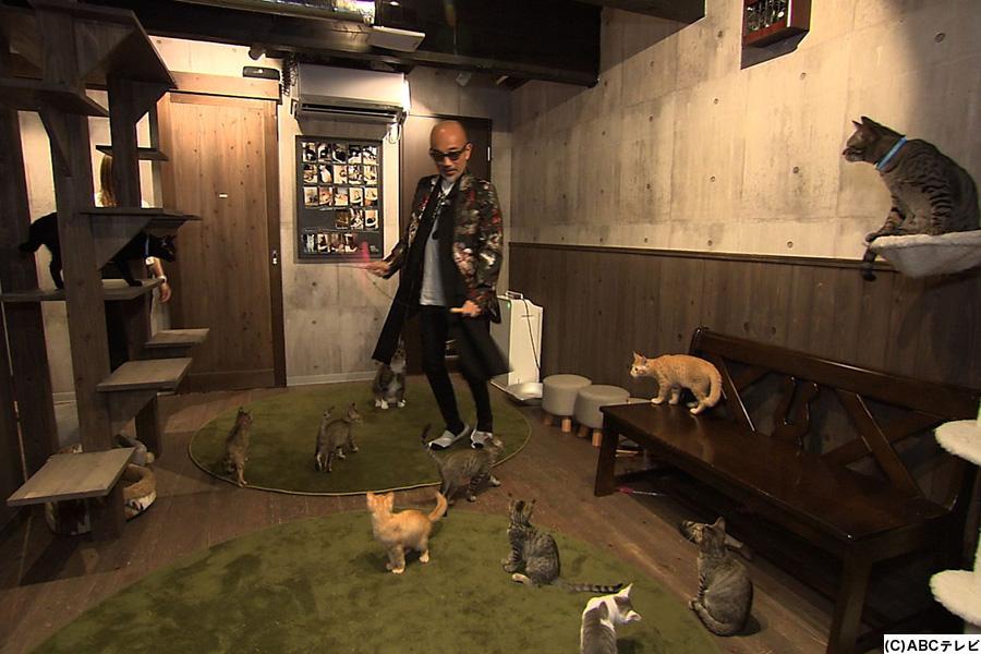 猫カフェで猫に囲まれる竹中直人