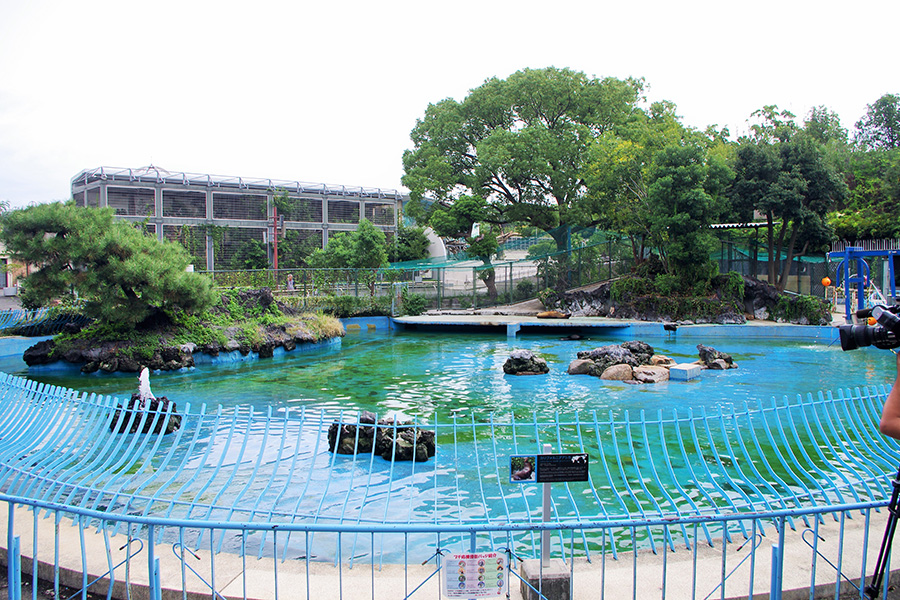 どことなく寂しさ漂う天王寺動物園のアシカ池(9月28日・朝10時頃撮影)