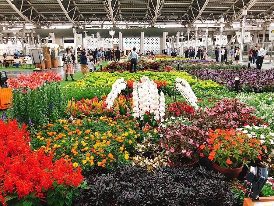 秋の季節を代表するコスモスやバラなど、色とりどりの花であふれる会場(27日・大阪市内)