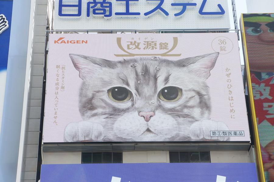 インスタグラムで人気の猫「なごむくん」がイラスト化