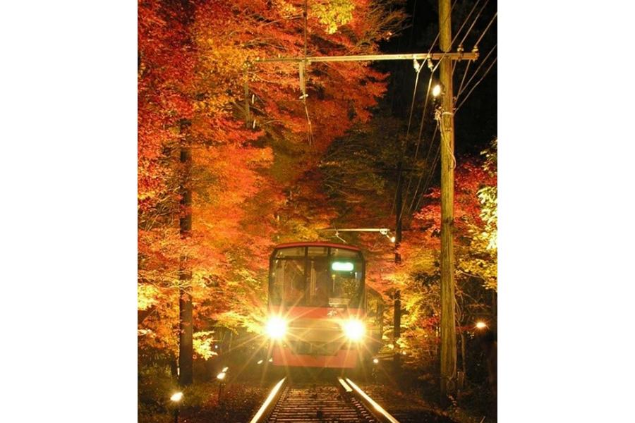 紅葉の下を列車でくぐり抜ける「もみじトンネル」