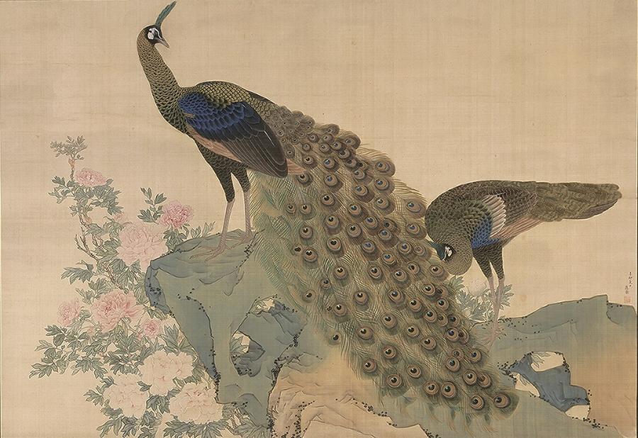 重要文化財「牡丹孔雀図」 円山応挙、明和8年(1771)、京都・相国寺蔵、11/26~12/15展示