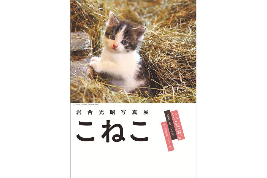 人気の写真展『こねこ』が大阪の「スカイオ」で開催