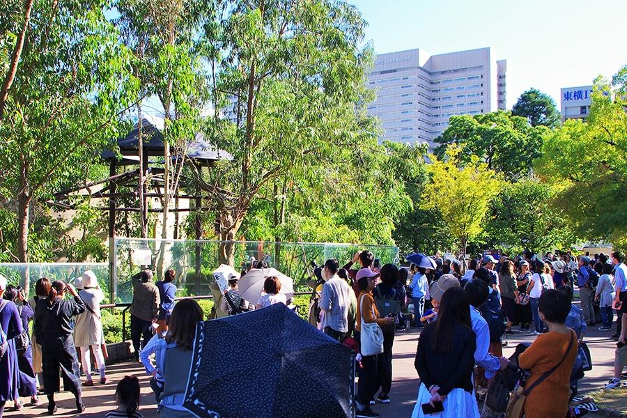 アークの最後の姿を見るため、コアラ館には多くの人が訪れた(9日・天王寺動物園)