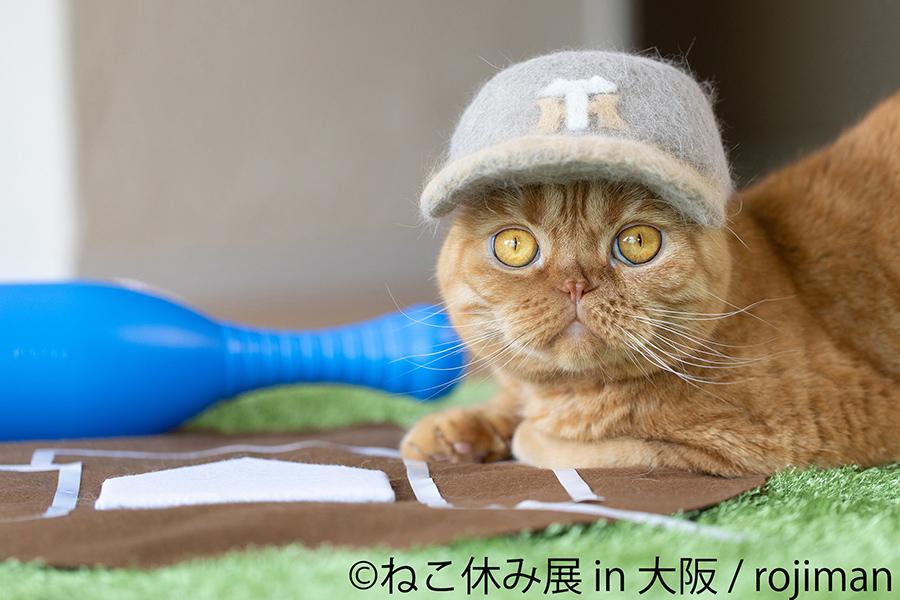 rojimanによる抜け毛アート。「阪神タイガース」のキャップをかぶり、こちらのトラッキーバージョンが登場