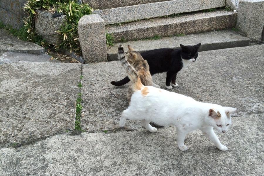 かわいいノラ猫に、エサをあげたくなる気持ちも分からなくはないが・・・(写真はイメージ)