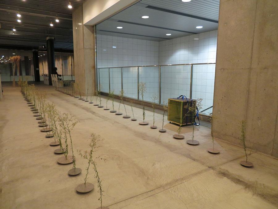 武田晋一《running》2019年 鉄道草とも呼ばれる外来植物「ヒメムカシヨモギ」》を、円形の粘土板(時計のムーブメントがセットされており、回転する)の上に設置し、線路のように並べている。鉄道の発展が人間に与えた影響(速度や効率性を重視する生活)を、その真逆ともいえるほのぼのとした表現で示唆している