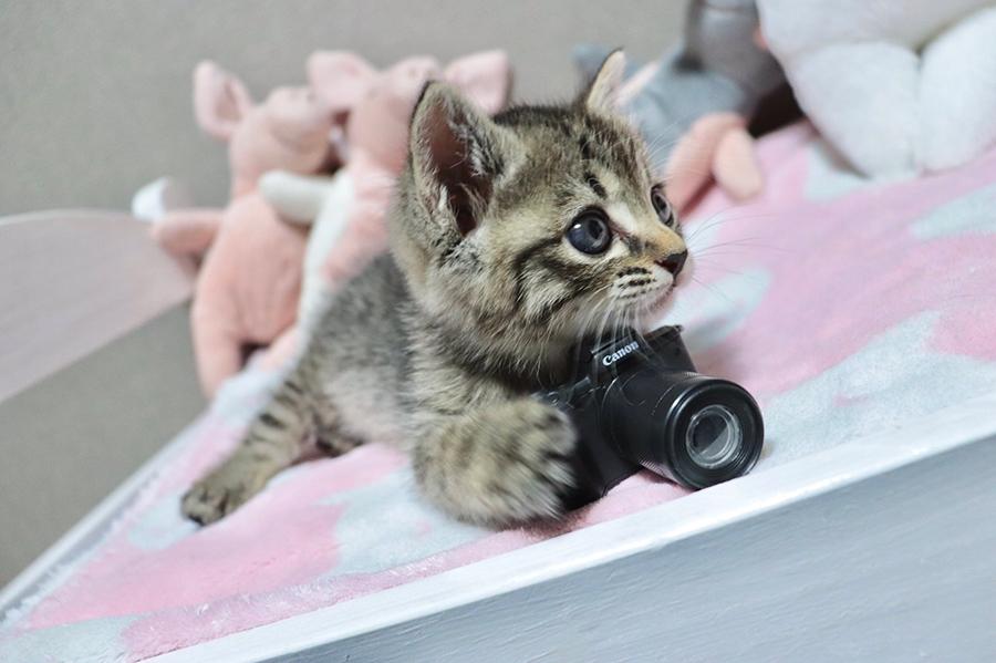 「可愛いいいいいいいいいいい」と話題、子猫のエルちゃん(提供:the miさん )