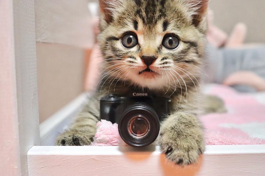 SNSで話題、かわいすぎるカメラニャン