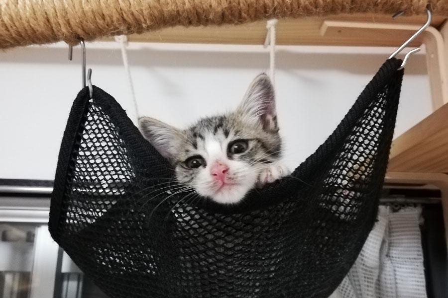 大阪府の『子猫育成サポート事業』で子猫育成サポーターに預けられている子猫の様子 提供:大阪府