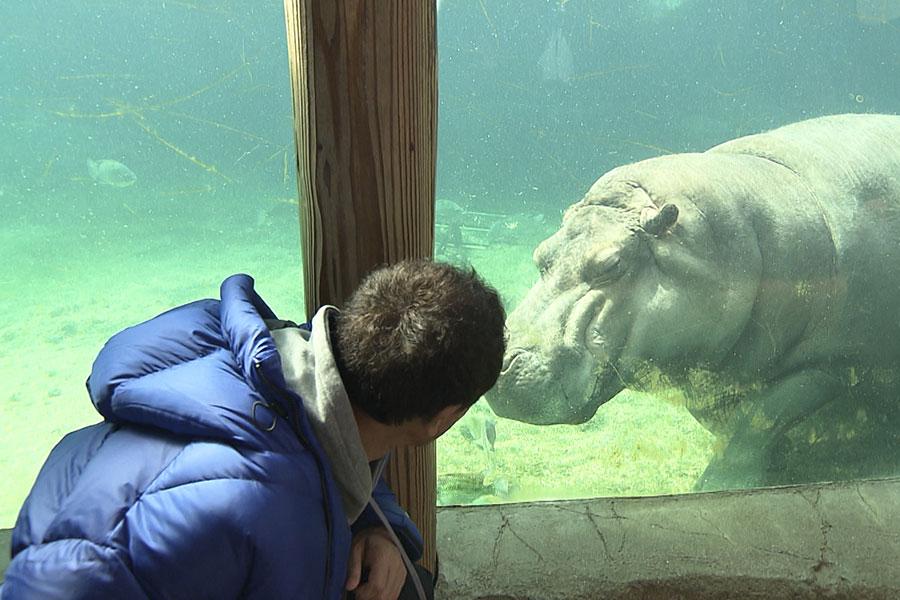 動物園にて、カバと見つめ合う浜田(写真提供:MBS)
