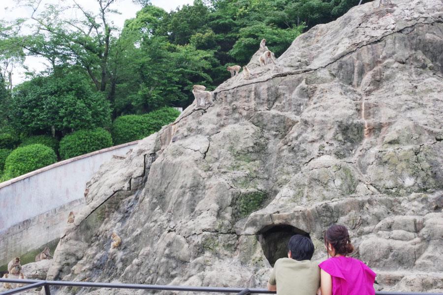 「みさき公園」で飼育されてきた動物ら。一部を除き、「アドベンチャーワールド」への譲渡が決まった(2019年6月撮影)