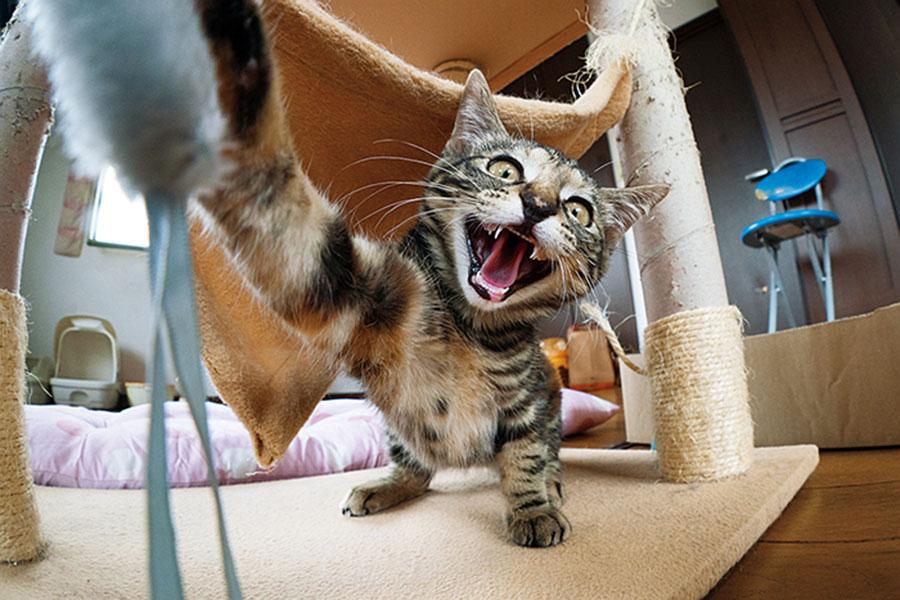 『にゃんぱく』保護猫写真家・ねこたろうさんの保護猫写真