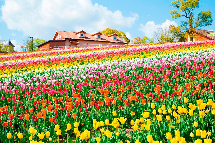 メイン会場の花畑