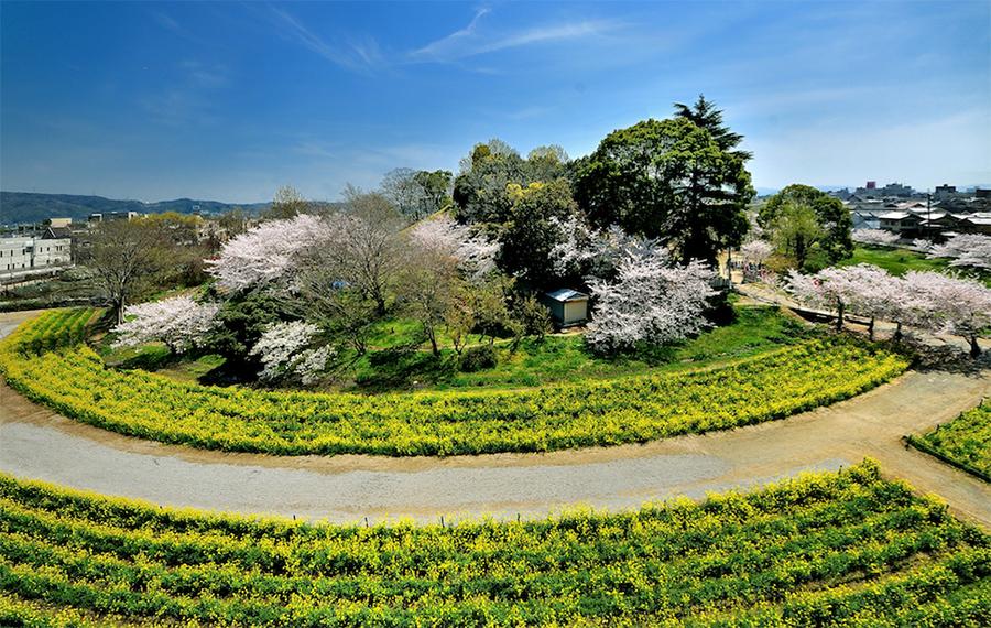 藤井寺市のインスタ映えスポット、津堂城山古墳。春には丘陵上で満開の桜を愛でることができたり、外周は城山史跡公園として整備されていて、市民の憩いの場となっている