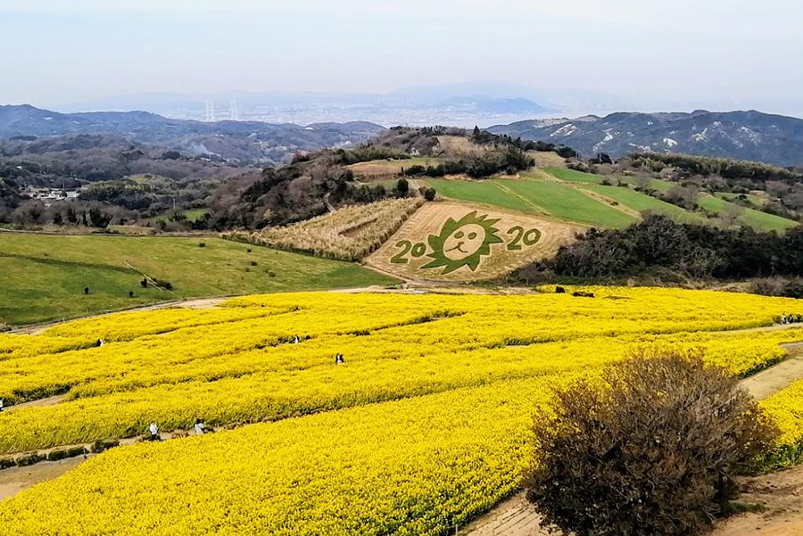 淡路島「花さじき」、絶景の空中回廊を新設