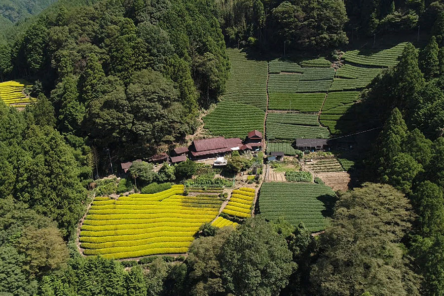 今回紹介されるのは、静岡県の北部にある「物置になった家」。山を切り開いた中に広がる美しい茶畑を見下ろす高台に建つ