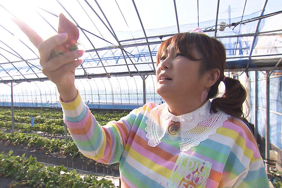 世の中に流通しないという玉名の絶品いちごを食べるはるな愛 (C)ABCテレビ