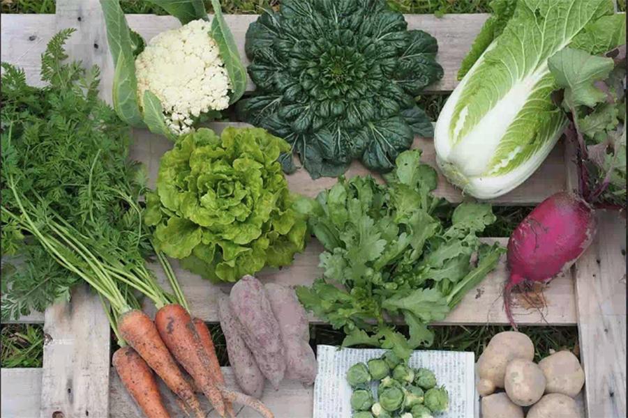 「淡路島ファーム太陽と海」は、栽培期間中農薬不使用・化学肥料不使用。収穫された野菜の多くを収穫当日に、家庭・飲食店に発送