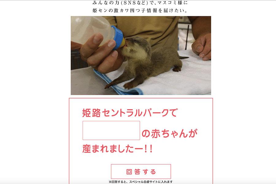 2019年秋の自虐サイト「日本一マスコミと心の距離が遠いサファリパーク」。カワウソの四つ子が生まれても取材されない辛さを自虐している
