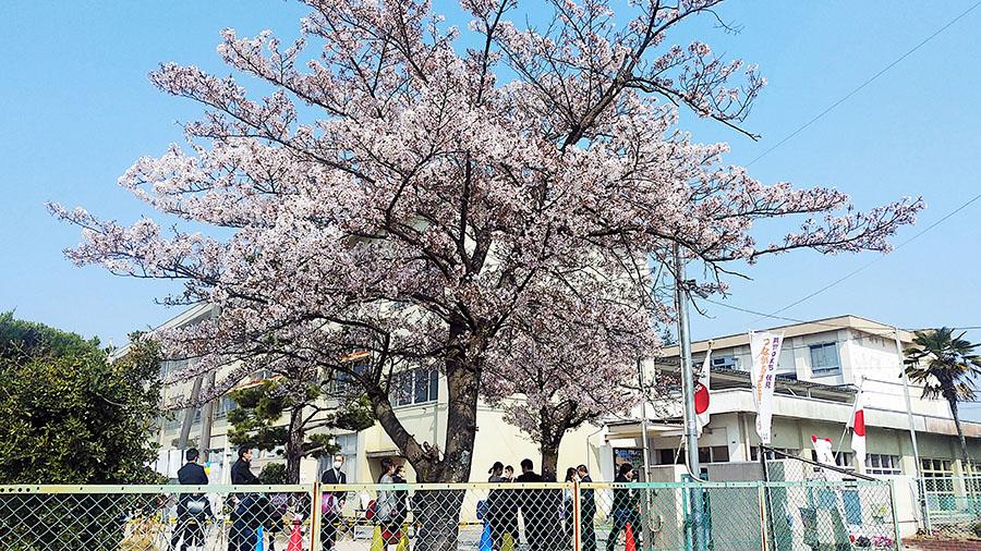 運動場で開催され、青空入学式となった奈良市内の小学校の様子(4月8日)