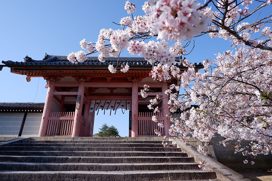 朱塗りの中門が桜に映える、仁和寺(京都市右京区)