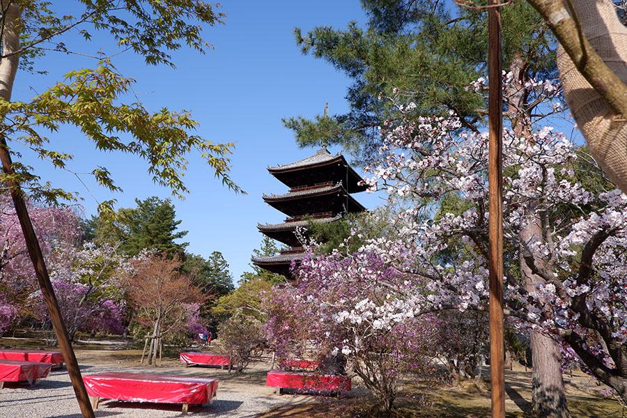 仁和寺は、山内に重要文化財の観音堂や五重塔などもある、京都きっての名刹