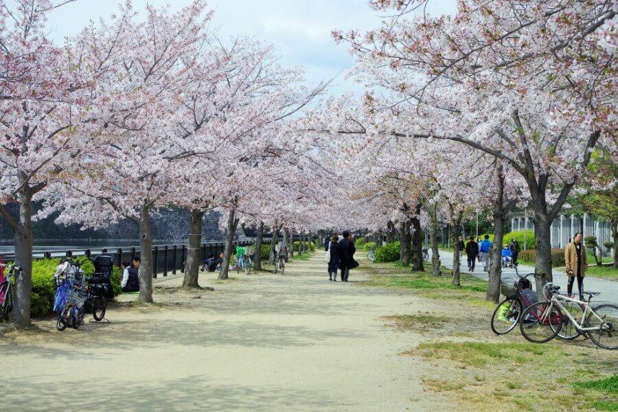 例年たくさんの人が花見をする桜並木もほとんど人がいなかった(4月11日・大阪城公園)