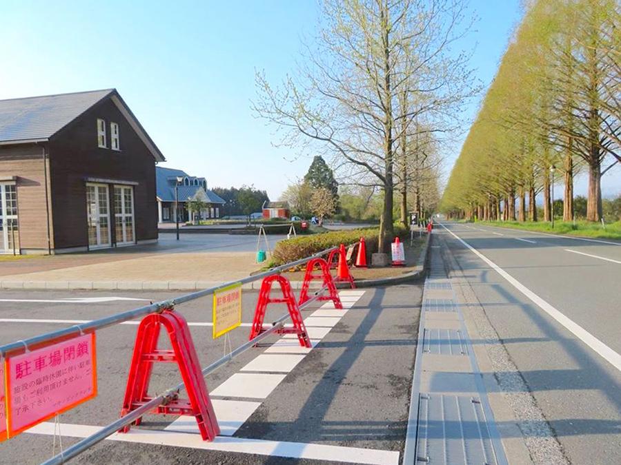 観光客が多く訪れるメタセコイア並木は、駐車場を閉鎖