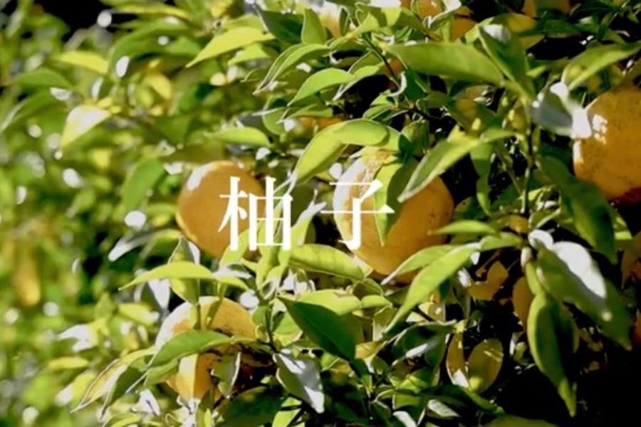 日本の食事と「翠(SUI)」の相性の良さを表現する、イメージビジュアル。