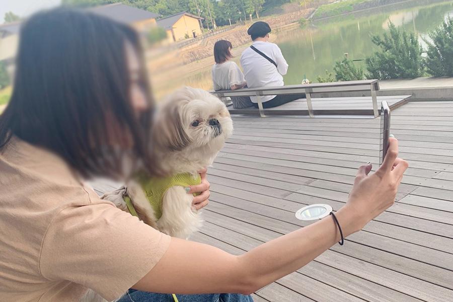 緊急事態宣言が解除されて、愛犬との散歩を楽しむ新入社員