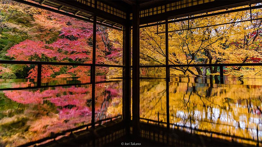 紅葉が見事な秋の「瑠璃光院」(京都市左京区)(提供:Iori Takanoさん)