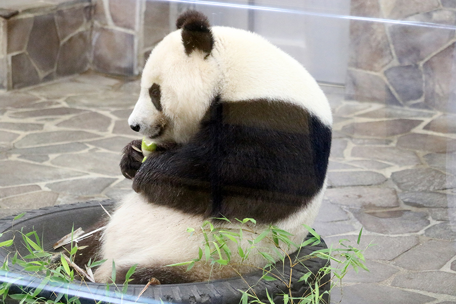 愛が詰まったパンダの「タンタン展」、20年の歴史にホロリ