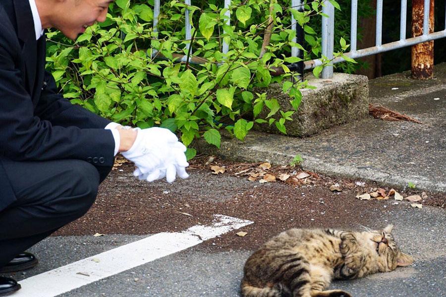 ねこを溺愛する京都のMKタクシー、プロ並みの写真も話題