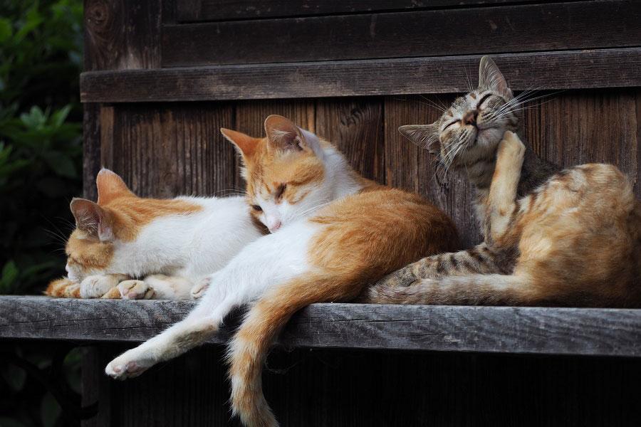 ツイッターに投稿された、今井さん撮影の「#MK猫写真」