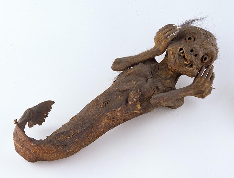 人魚のミイラ ライデン国立民族学博物館蔵 Collection Nationaal Museum van Wereldculturen. Coll. no. RV-360-10410 江戸時代の見世物小屋を引退後、出島経由でオランダに渡ったものだという