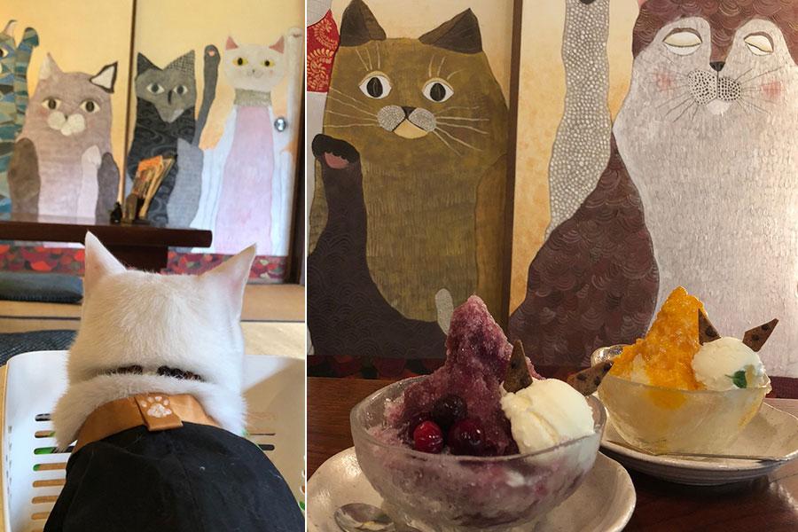 ドライバー・大石さん撮影のおすすめスポット「猫猫寺」8月のツアーの対象店(メニューはイメージ)