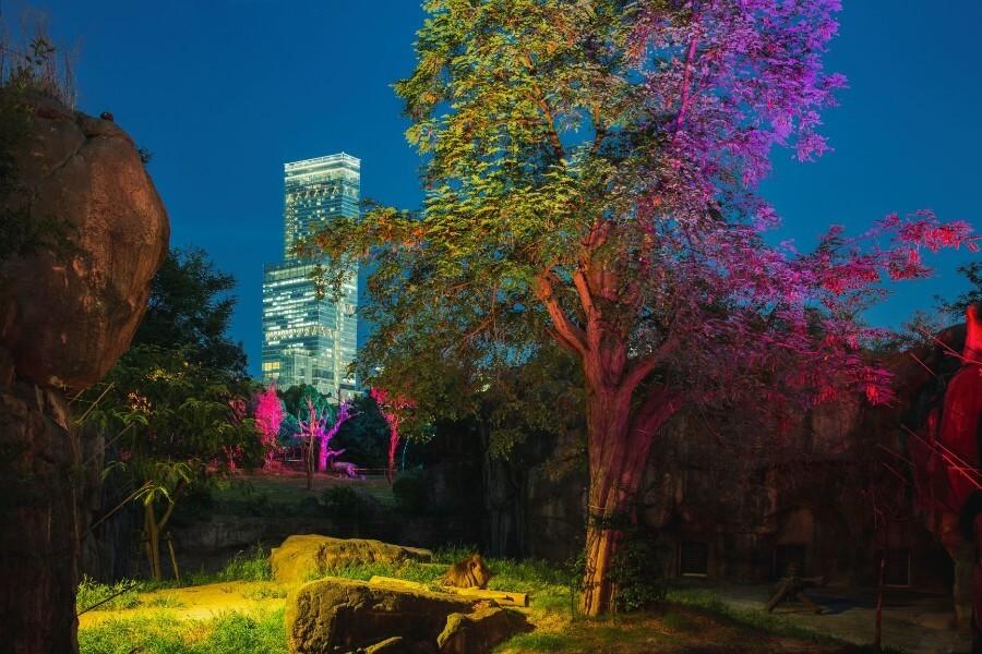 天王寺動物園の『夏のナイトZOO』のアフリカサバンナゾーンではバックにあべのハルカスが見え、都会と自然が組み合わさった珍しい風景を楽しめる