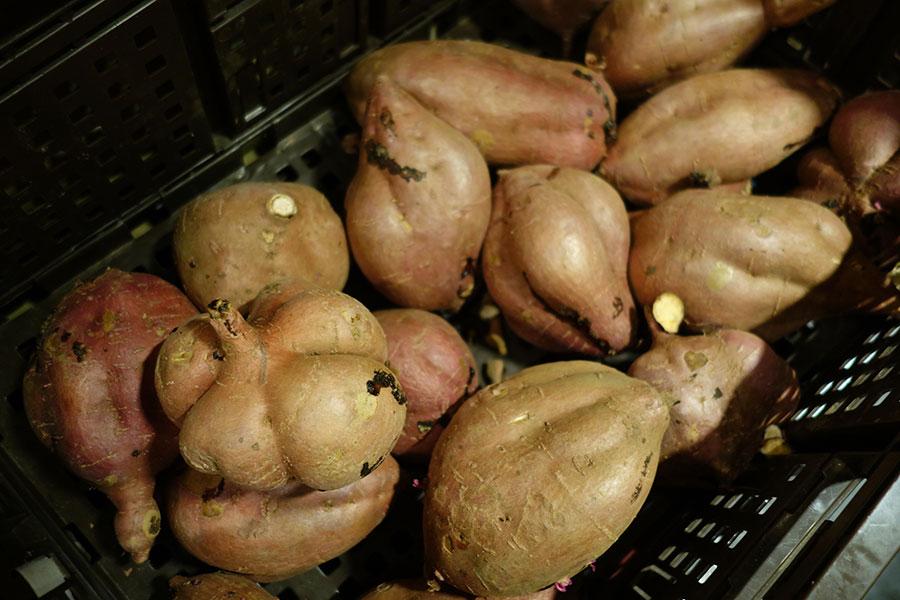 こちらの芋が焼き芋となり、「おいもとアイス」などのメニューで楽しめる