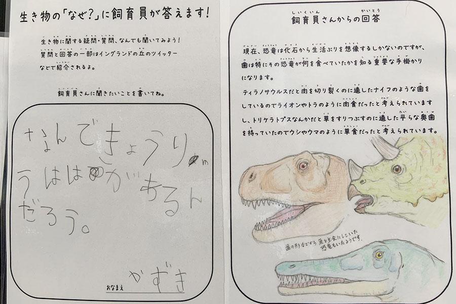 恐竜の質問は多いそう。にしても、絵がうますぎる…!(写真提供:淡路ファームパーク イングランドの丘)