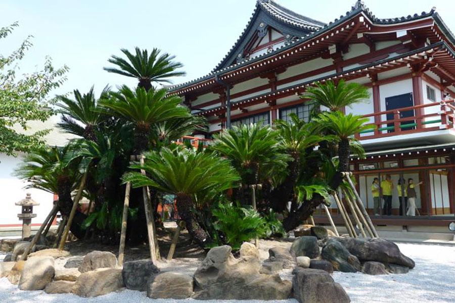 妙国寺にある樹齢1100年の大蘇鉄には、織田信長にまつわる伝説も