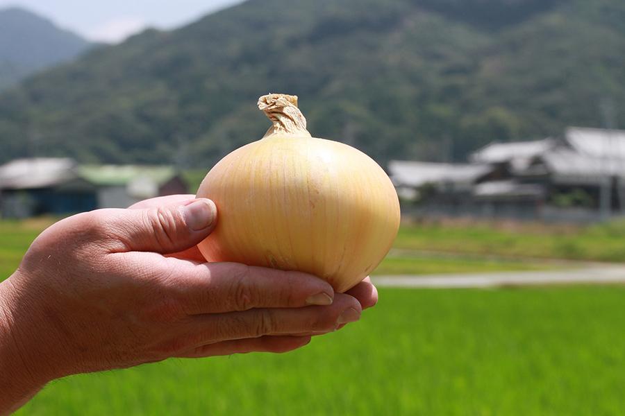 サラダ専用の淡路島産玉ねぎ「生一番」